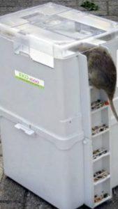 Disinfestazione Roma: esche per topi